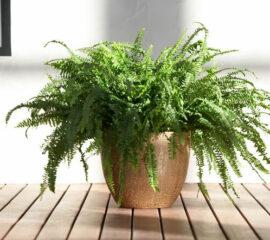 Air so pure Zahradnictvi Líbeznice