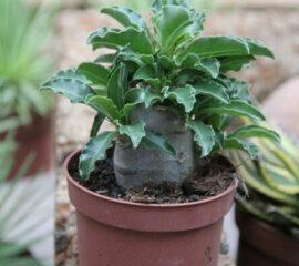 Kaktusy a sukulenty Zahradnictví Líbeznice