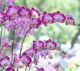 Orchideje Zahradnictví Líbeznice
