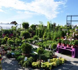 Zahradnictví Líbeznice - exteriér