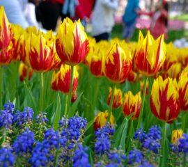 Cibulky pro krásnější jaro