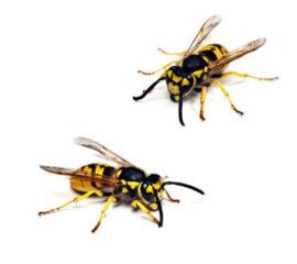 Jak na obtížný hmyz?