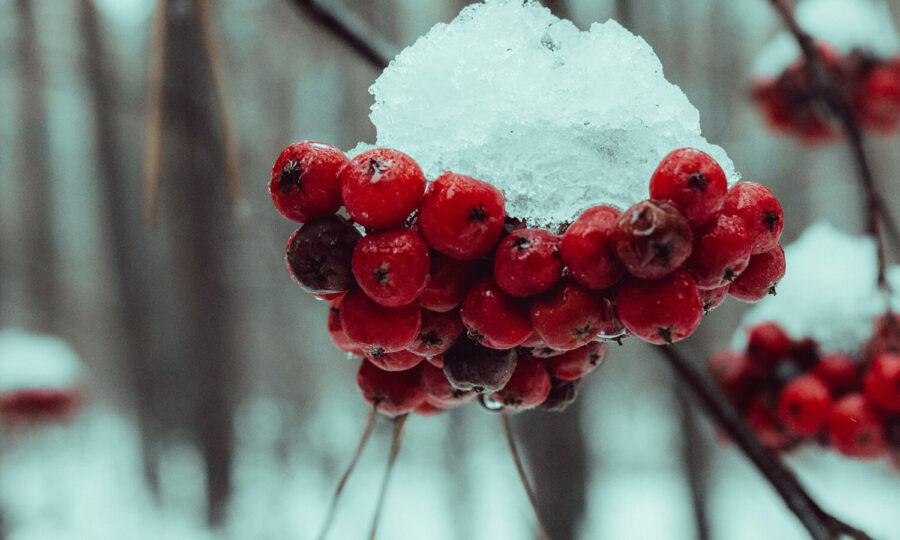 Kontrola zimujících rostlin
