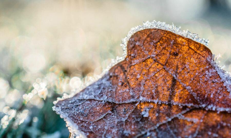 Ochrana rostlin – podzim