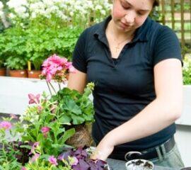 Péče o balkónové květiny