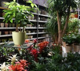 Péče o pokojové rostliny v zimním čase