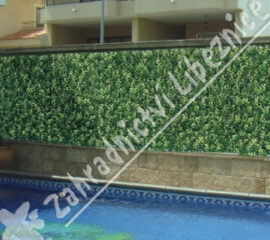 Buxus Long