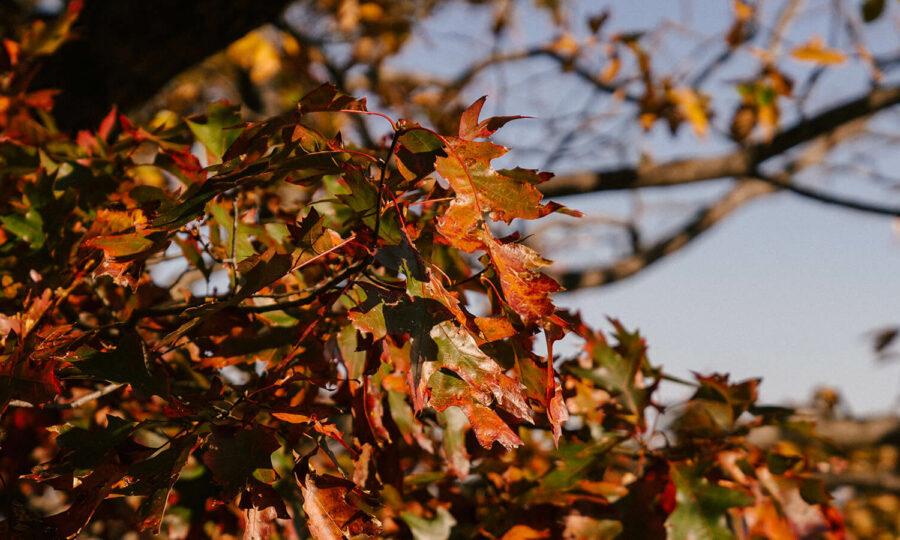Podzimní hnojení