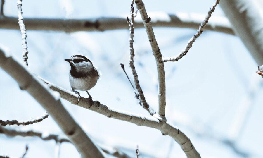 Prostřete užitečným ptáčkům