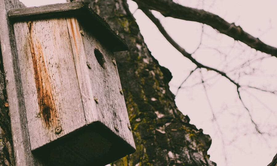 Ptačí budka znamená život