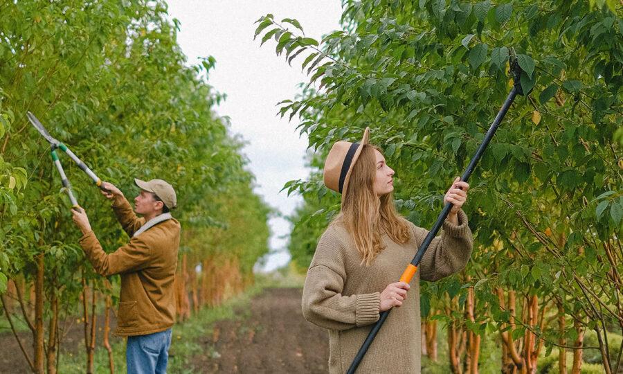 Předjarní řez ovocných stromků a keřů