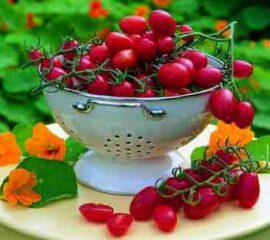 Roubovaná zelenina - rajčata Dasher