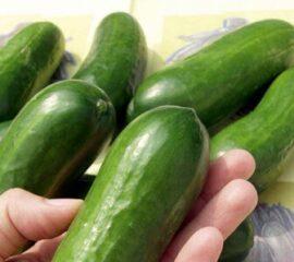 Roubovaná zelenina - okurka