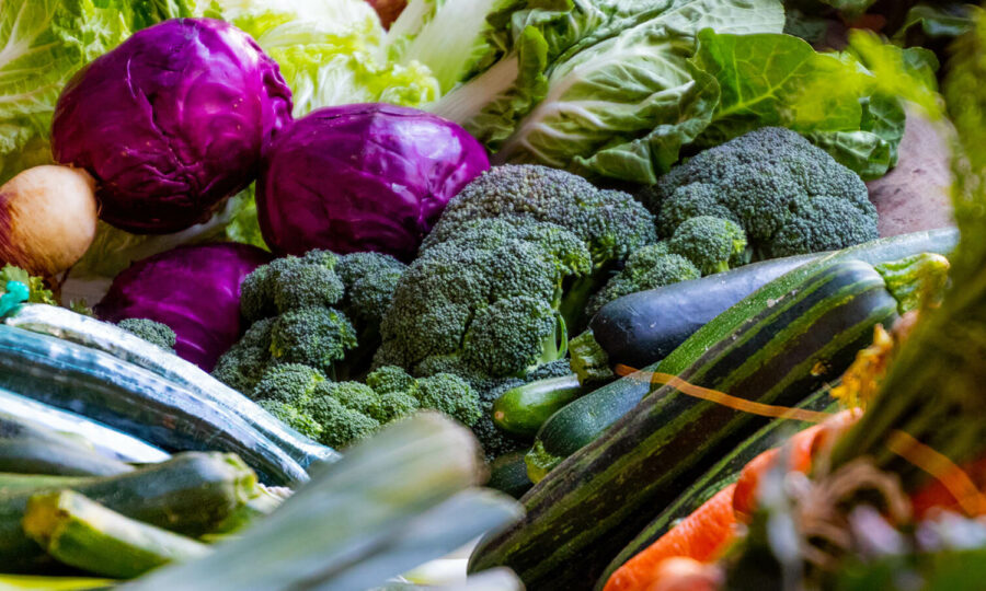 Roubovaná zelenina slaví úspěchy