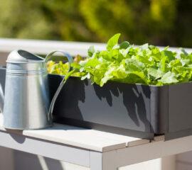 Salát na balkóně