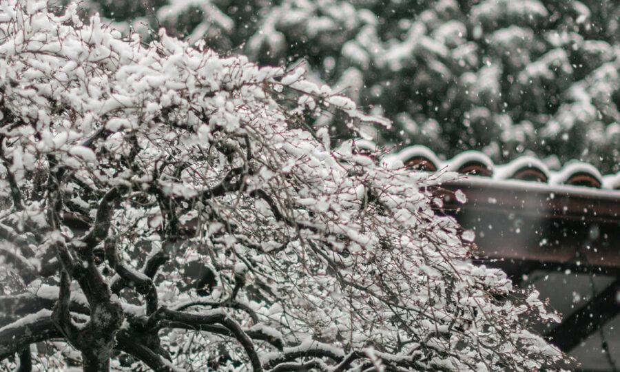 Sníh – přítel zahradníků