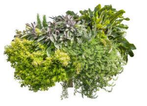 Truhlík dekorační bylinky