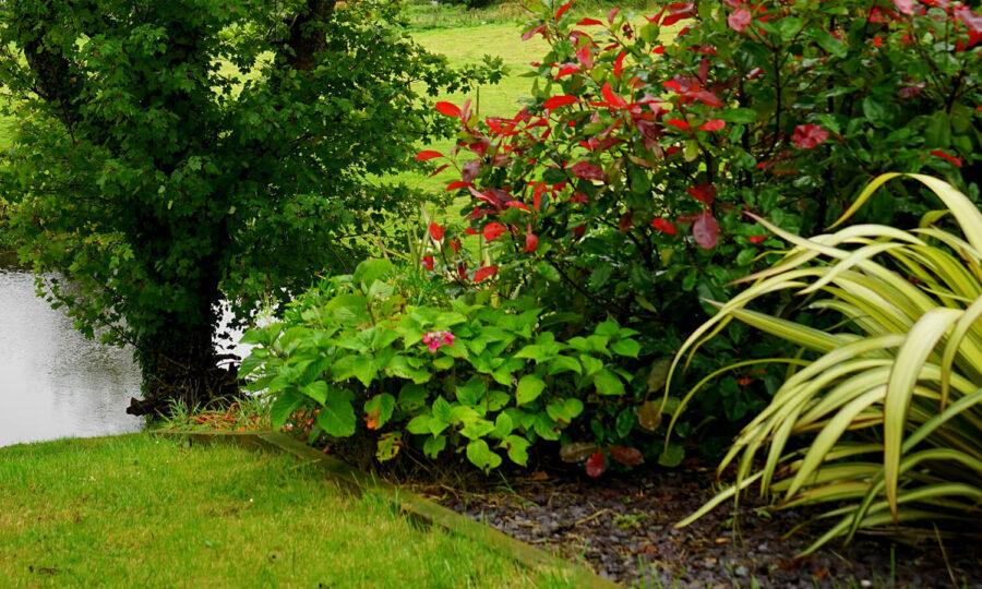 Venkovní rostliny