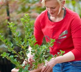 Výsadba ovocných stromů
