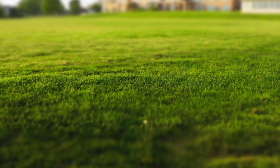 Jarní obnova trávníku