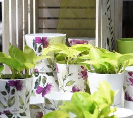 Pokojové rostliny Zahradnictví Líbeznice