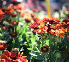 Venkovní rostliny Zahradnictví Líbeznice