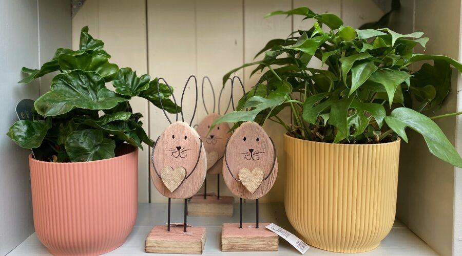 Nové veselé jarní obaly na rostlinky