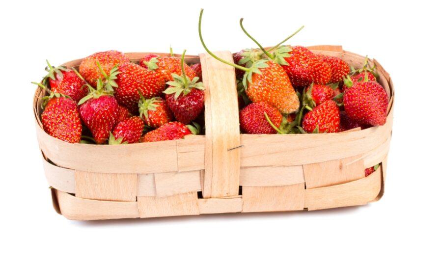 Sladké jahody z Vraňan již v sobotu na prodejně!