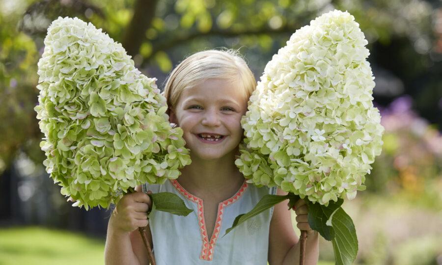 Hortenzie se stane královnou vaší zahrady!